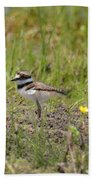 Baby Killdeer Beach Towel