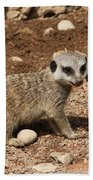 Baby Meerkat Beach Towel