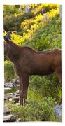 Baby Moose Baxter State Park Beach Towel