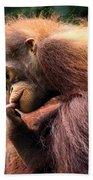Baby Orangutan Borneo Beach Towel