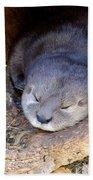 Baby Otter Beach Towel