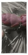Baby Pine Cones In Partial Color Beach Towel