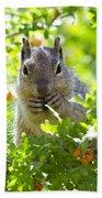 Baby Rock Squirrel  Beach Towel