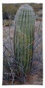 Baby Saguaro Cactus Beach Towel