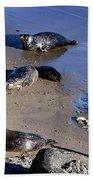 Baby Seals Beach Towel