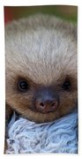 Baby Sloth Beach Towel