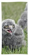 Baby Snowy Owls Beach Towel