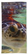 Baby Turtle Beach Towel by Carey Chen