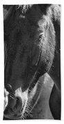 Bachelor Stallions - Pryor Mustangs - Bw Beach Towel