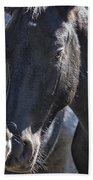 Bachelor Stallions - Pryor Mustangs Beach Sheet
