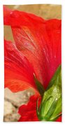 Back Of A Red Hibiscus Flower Against Stone Beach Towel