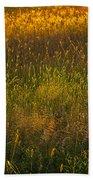 Backlit Meadow Grasses Beach Towel