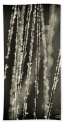 Backlit Sepia Toned Wild Grasses In Black And White Beach Towel
