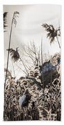 Backlit Winter Reeds Beach Towel
