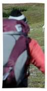 Backpacker Watches Dall Sheep Beach Towel