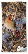 Backyard Birds Female Nothern Cardinal Beach Towel