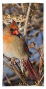 Backyard Birds Female Nothern Cardinal Square Beach Towel