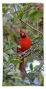 Backyard Cardinal In Tree Beach Towel