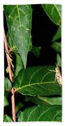 Backyard Hopper Beach Towel