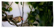 Bad Hair Day-female Northern Cardinal Beach Towel