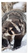 Badger In The Snow Beach Towel