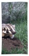 Badger In Yellowstone Beach Towel