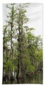 Bald Cypress - Axodium Distichum Beach Towel