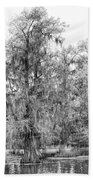 Bald Cypress Swamp In Black And White Beach Towel
