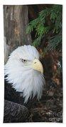 Bald Eagle #3 Beach Towel