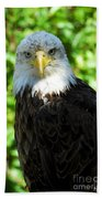 Bald Eagle - Alaska Beach Towel