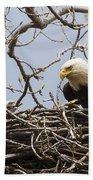 Bald Eagle And Eaglet Beach Towel