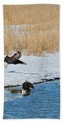 Bald Eagle Battle Beach Towel