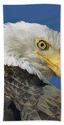 Bald Eagle Closeup Beach Towel