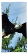 Bald Eagle Feeding 2 Beach Towel