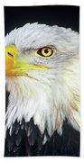 Bald Eagle Hailaeetus Leucocephalus Wildlife Rescue Beach Towel