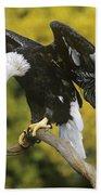 Bald Eagle In Perch Wildlife Rescue Beach Towel