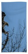 Bald Eagle Juvenile Landing In Tree Top Beach Towel