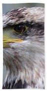 Bald Eagle - Juvenile - Profile Beach Towel