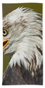 Bald Eagle... Beach Towel
