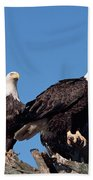 Bald Eagles Quartet Beach Towel