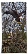 Bald Eagles At Nest Beach Towel