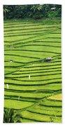 Bali Indonesia Rice Fields Beach Towel