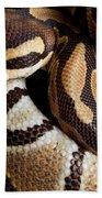 Ball Python Python Regius Beach Towel