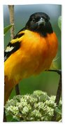 Baltimore Oriole Beach Towel