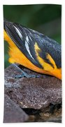 Baltimore Oriole Drinking Beach Towel