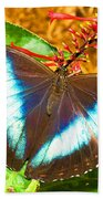 Banded Morpho Butterfly Beach Towel
