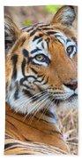 Bandhavgarh Tigeress Beach Towel