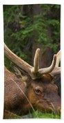 Banff Elk Beach Towel
