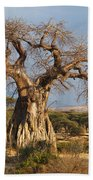 Baobab Tree Ruaha Np Tanzania Beach Towel