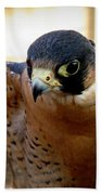 Barbary Falcon Wings Stretched Beach Towel